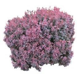 bush png image r 243 żności pinterest tree psd
