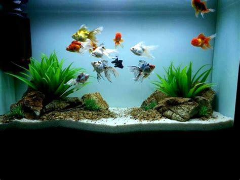 Hgtv Home Design Store 25 best ideas about aquarium design on pinterest