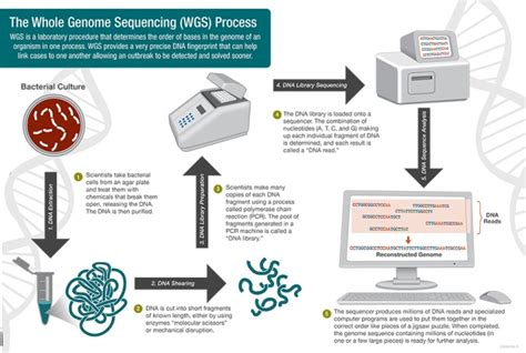 whole genome sequencing illumina 30 years of thermal cycler innovations 2 paving the way