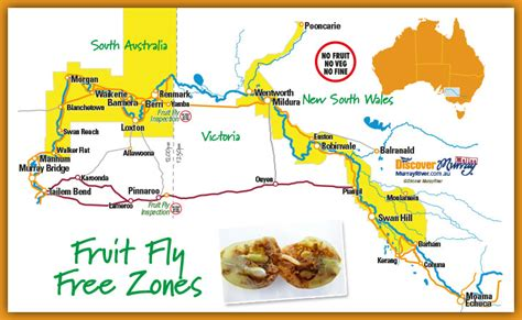 fruit zone map fruit fly information visitwentworth