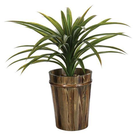 Plante Verte Yucca by Plante Yucca Prix