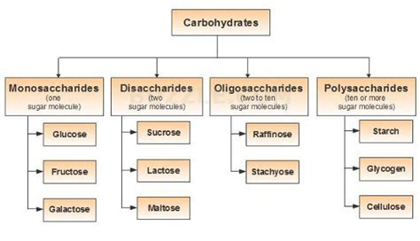 carbohydrates names carbohydrates types and properties