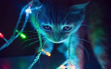 cat christmas tree lights wallpaper 1920x1200 12042