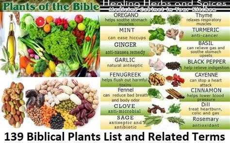 beginners reference  medicinal herbs  spices biblical digital internet information