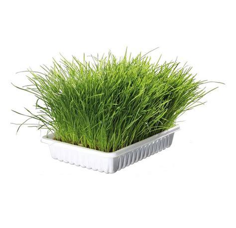 Soft Grass trixie cat soft grass dish 100g