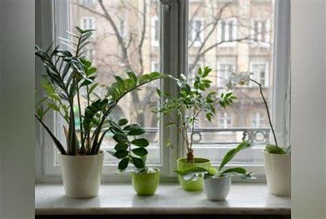 plante pour chambre à coucher plantes vertes comment les placer dans la maison