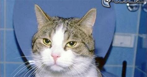 So Khusus Kucing manajemen kotoran kucing 3 zona kucing