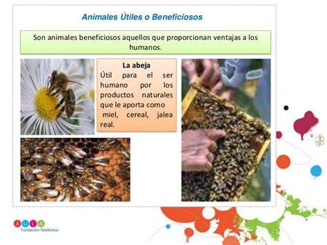 191 que comen los animales vertebrados 191 de que se alimentan animales beneficiosos y perjudiciales