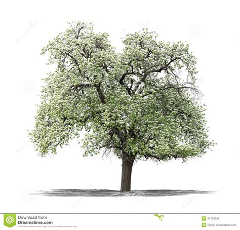 white and green tree green tree on a white background stock image image 31183641