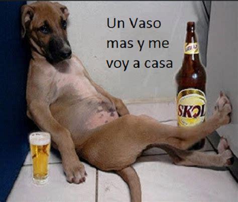 imagenes graciosas de borrachos facebook frases chistosas animales para compartir solo imagenes