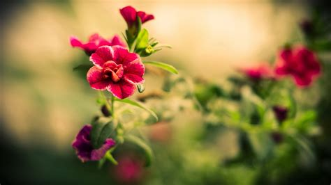 wallpapers of the day beautiful red flowers 1920x1080px