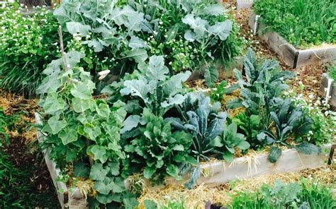 Fall Garden Update Using Cover Crops And Straw Mulch Winter Cover Crops For Vegetable Gardens