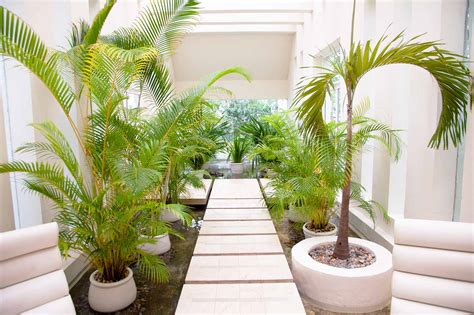 indoor garden ideas for your living space indoor plants