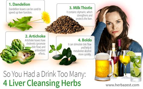Safe Herbal Liver Detox For Alcoholic by So You Had A Drink Many 4 Liver Cleansing Herbs