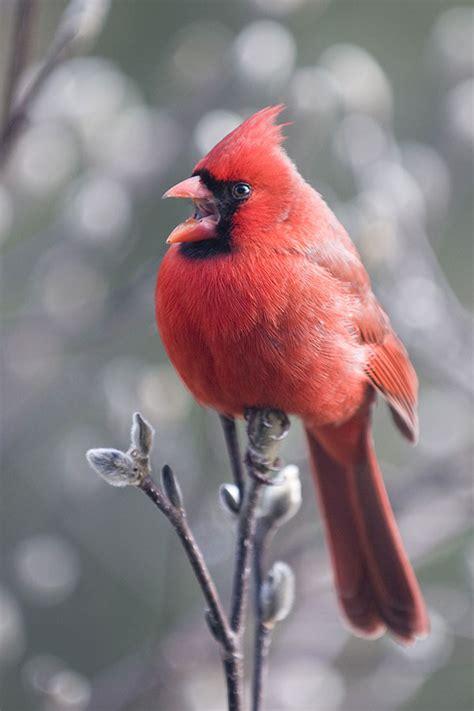 great backyard bird count great backyard bird count cedar springs post newspaper