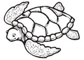 free printable turtle coloring pages for - Sea Turtle Coloring Page