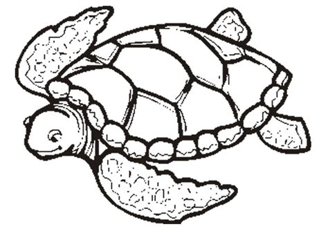 Turtle Coloring Pages free printable turtle coloring pages for