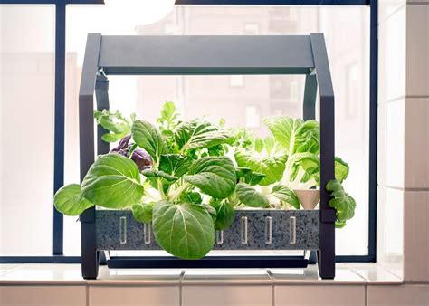 best indoor garden system indoor garden systems that let anyone grow plants the
