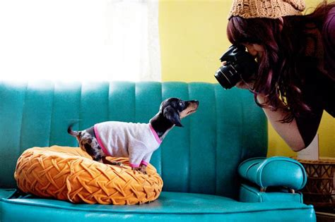 pet and photography for everybody secrets from a pro books tips for pet photography a beautiful mess