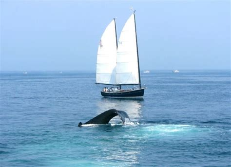 catamaran boat facts 378 best images about ketch me if you can on pinterest
