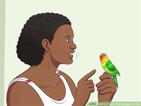 how to teach your to speak how to teach your budgie to talk 7 steps with pictures