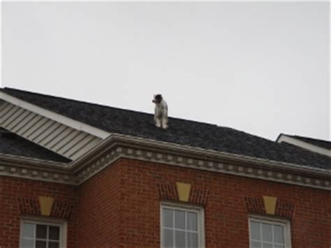 dog on a roof dog on roof how social networking has changed the speed