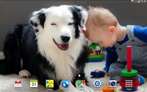 download wallpaper anak anjing foto anak anjing yang lucu terbaru distro dp bbm