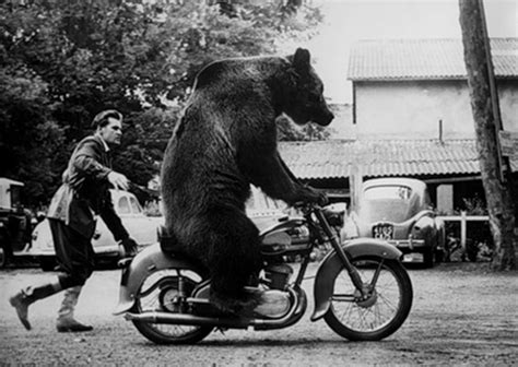 bear on a bike 301 moved permanently