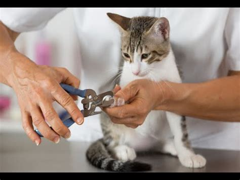 sedative for grooming how to sedate a cat for grooming doovi