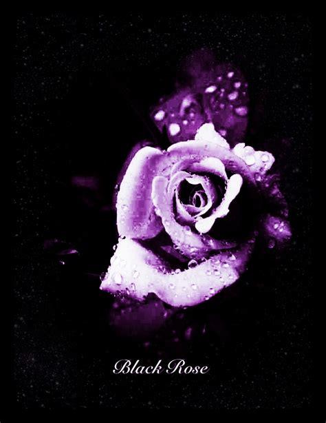 black rose purple by rose1371999 on deviantart