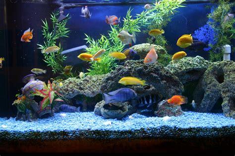 Aquarium Fish L by Fish And Aquarium Must Aquarium Accessories