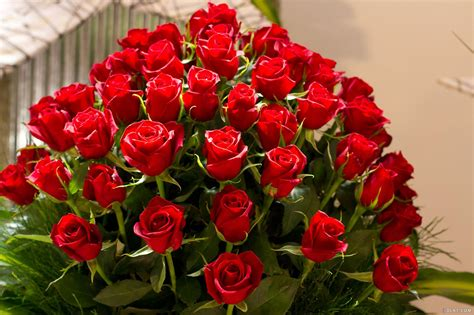 roses on day valentine s day roses ideas for your