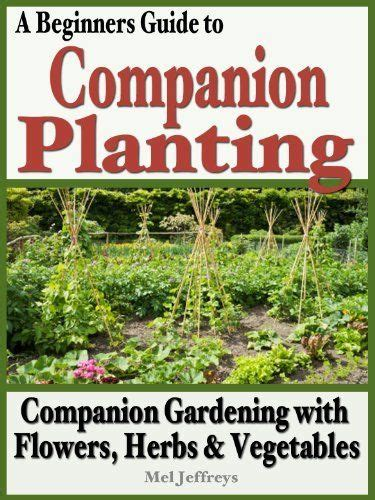 companion planting chart living herbs new zealand 17 best images about companion gardening on pinterest