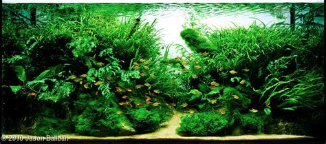 Best Substrate For Aquascaping by 2010 Aga Aquascaping Contest 166