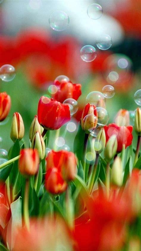 fiori hd sfondi hd fiori 70 immagini