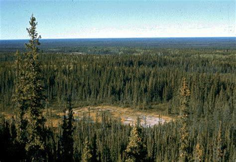 Interior Plains Agriculture Vegetation Regions The Canadian Encyclopedia