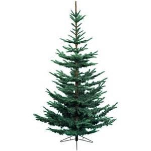 kaemingk nobilis fir blue christmas tree 8ft charlies
