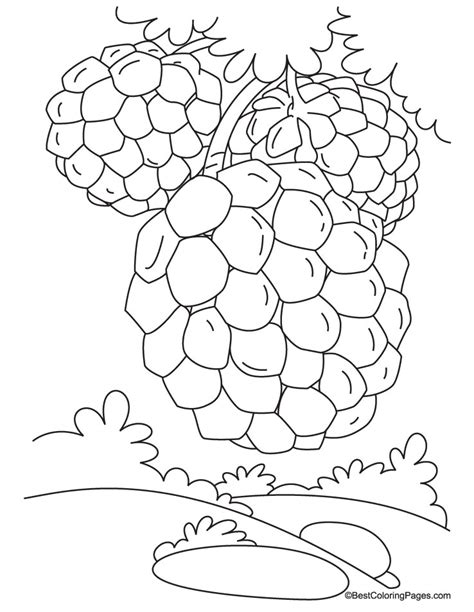custard apple coloring page custard apple on tree coloring pages download free