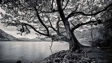 black and white images of trees 25 desktop wallpaper