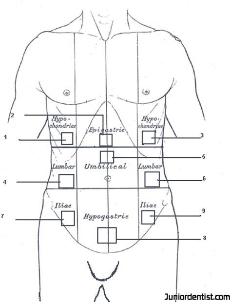 regions diagram abdominopelvic regions and quadrants diagram diagram