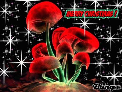 christmas shrooms picture  blingeecom