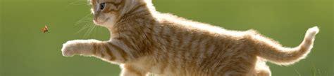 couper les griffes de chat