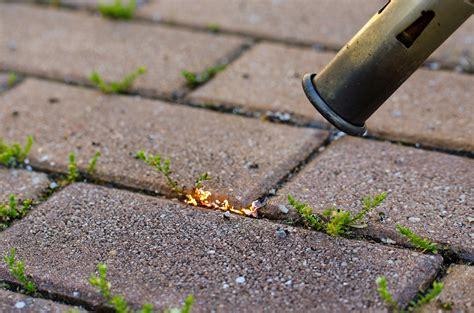 Farbe Pflastersteinen Entfernen by Unkraut Einfach Und Umweltfreundlich Entfernen