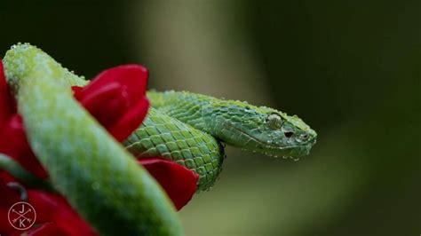 membuat makalah flora dan fauna flora dan fauna youtube