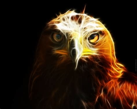 abstract eagle wallpaper eagle abstract wallpaper 31006