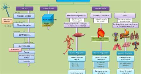 imagenes mapa mental del cuerpo humano esquemas diagramas gr 225 ficos y mapas conceptuales los