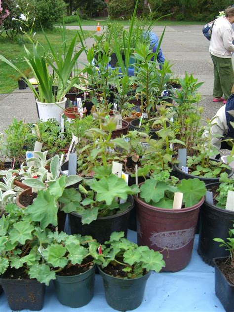 broadview garden club plant sale