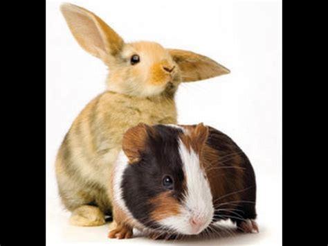 meerschweinchen und kaninchen in einem stall meine neuen abrollnester aus plastik doovi