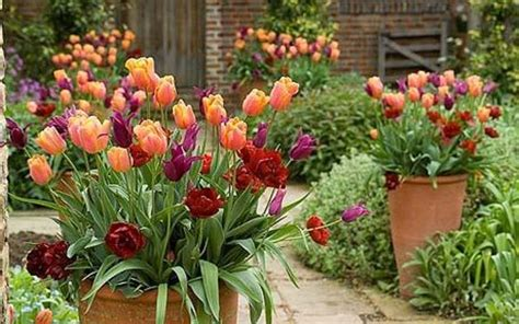 garden flower containers container gardening tips ideas flower plant