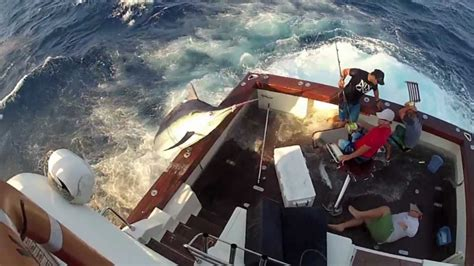 types of boats starting with g 600lb black marlin jumps in boat and lands on the crew